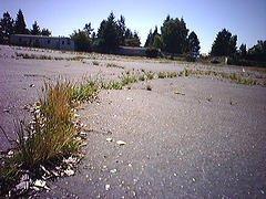grass_through_the_asphalt