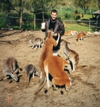Feeding the kangaroos, 2 July 2000