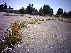 grass_through_the_asphalt